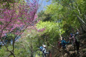 大札山・山犬段方面への登山について(林道南赤石線:全面通行止)
